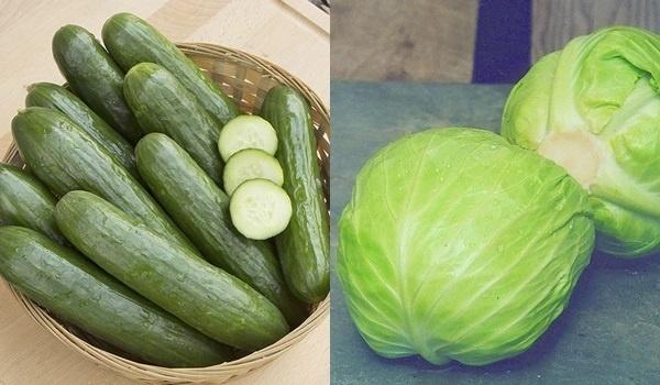 Chống lão hóa từ bắp cải và dưa chuột