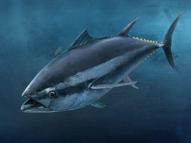 Nguồn gốc của Marine Collagen từ vảy cá biển sâu