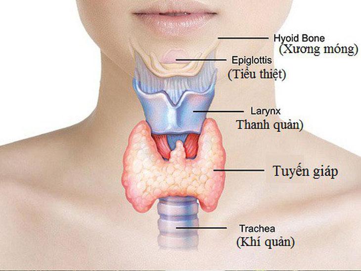 Thứ ba là sự ảnh hưởng của tuyến giáp lên cơ chế trao đổi chất của cơ thể.
