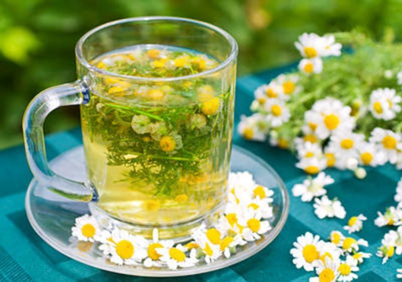 Trà hoa cúc thải độc tự nhiên