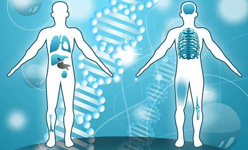 Và cuối cùng cơ thể là sản phẩm của bốn nhân tố trao đổi chất ở trên.